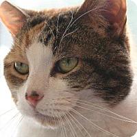 Adopt A Pet :: Caramaria - Pendleton, NY