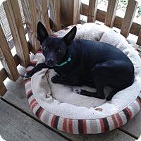 Adopt A Pet :: Mickey - Alliance, NE