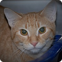 Adopt A Pet :: Rocket - Wilmington, OH