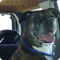 Adopt A Pet :: Ellie Fredricksen - Austin, TX