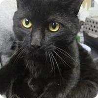 Adopt A Pet :: Coal  $20 - Lincolnton, NC