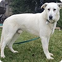 Adopt A Pet :: Bernard - Modesto, CA