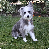 Adopt A Pet :: QUIGLEY - Newport Beach, CA