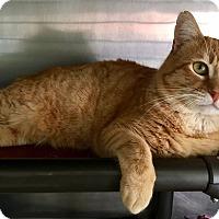 Adopt A Pet :: Thomas O'Malley - Oakdale, CA