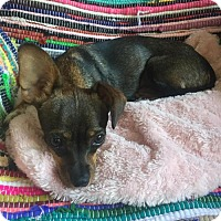 Adopt A Pet :: Gia - Tomball, TX