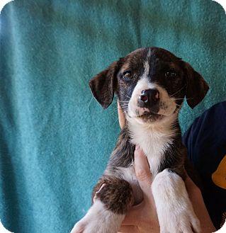 Papaya | Adopted Puppy...