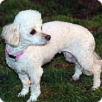 Adopt A Pet :: Paloma - Lynnwood, WA