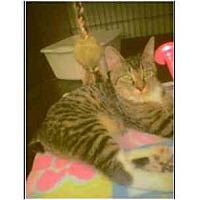 Adopt A Pet :: Stubbs - Owasso, OK