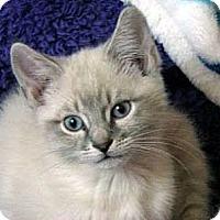 Adopt A Pet :: Bamboozle - Davis, CA