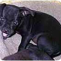 Adopt A Pet :: Jill - dewey, AZ