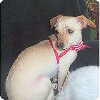 Adopt A Pet :: Layla - Mooy, AL