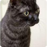 Adopt A Pet :: Puma - Chicago, IL