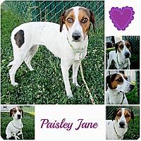 Adopt A Pet :: Paisley Jane will die - Sacramento, CA
