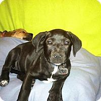 Adopt A Pet :: Alton - Phoenix, AZ
