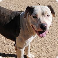 Adopt A Pet :: Hercules - Los Angeles, CA