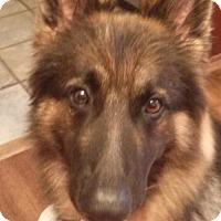 Adopt A Pet :: Chopper 3982 - Sterling, VA
