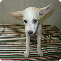 Adopt A Pet :: Bentley in CT - East Hartford, CT