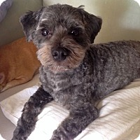 Adopt A Pet :: Oreo-adoption pending - Mississauga, ON