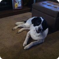 Adopt A Pet :: Patch - Austin, TX