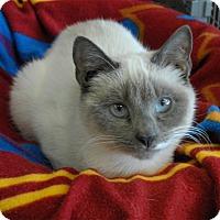 Adopt A Pet :: Mia - Winchendon, MA