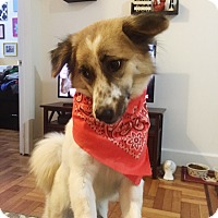 Adopt A Pet :: Fern - Long Beach, NY