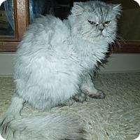Adopt A Pet :: Gwennie - Medina, OH