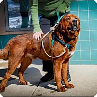 Adopt A Pet :: Toby - Boulder, CO