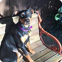 Adopt A Pet :: Polka dott Martino - Fresno, CA
