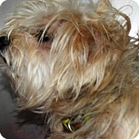 Adopt A Pet :: Danny - Terrell, TX