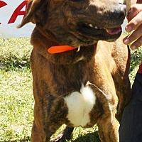 Adopt A Pet :: Samson - Grayson, LA