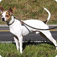 Adopt A Pet :: Jersey - Batavia, OH