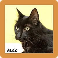 Adopt A Pet :: Jack - Aiken, SC