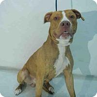 Adopt A Pet :: TIGER - Orlando, FL