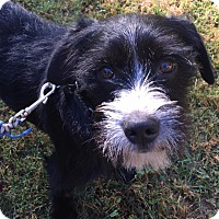 Terrier (Unknown Type, Small) Mix Dog for adoption in CUMMING, Georgia - Dagwood