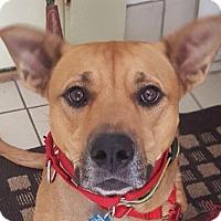 Adopt A Pet :: Elsa - Pontiac, MI