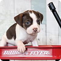 Adopt A Pet :: Nanna - Waldorf, MD