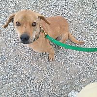 Adopt A Pet :: BEN - Calgary, AB