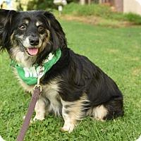 Adopt A Pet :: MICKEY - Courtesy post - Marina Del Ray, CA