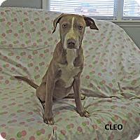 Adopt A Pet :: Cleo - Washington, GA