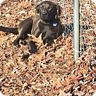Adopt A Pet :: Thelma