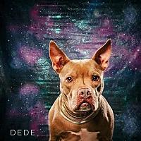 Adopt A Pet :: DeDe - Spring, TX