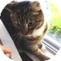 Adopt A Pet :: Avery - Vancouver, BC
