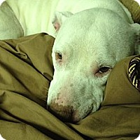 Adopt A Pet :: Daisy - Grand Rapids, MI