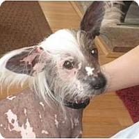 Adopt A Pet :: Tango (NH) - Gilford, NH