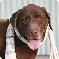 Adopt A Pet :: Shadow - Canoga Park, CA