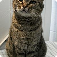 Adopt A Pet :: Mayon - Greensboro, NC