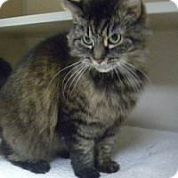 Adopt A Pet :: Percilla - Hamburg, NY