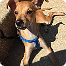 Adopt A Pet :: Ryder! *Adoption Pending*