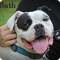 Adopt A Pet :: Goliath - Daleville, AL