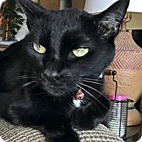 Adopt A Pet :: Pretty Girl Furball - Columbus, OH